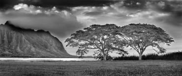 Black and White Oahu.